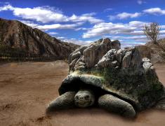 Tortoise peak